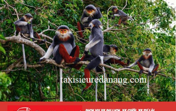 Bán đảo Sơn Trà – Những cánh rừng nguyên sinh được bảo tồn